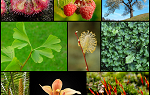 Collage of images showing diversity of vegetation